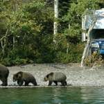 Don't Let Bears Ruin Your RV Camping Trip