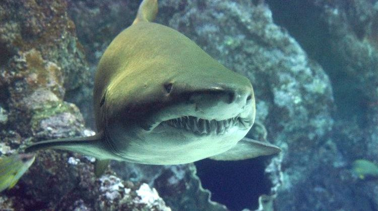 Should you Worry about Sharks in Florida on Your Next Trip?