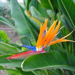 Malaga Flower