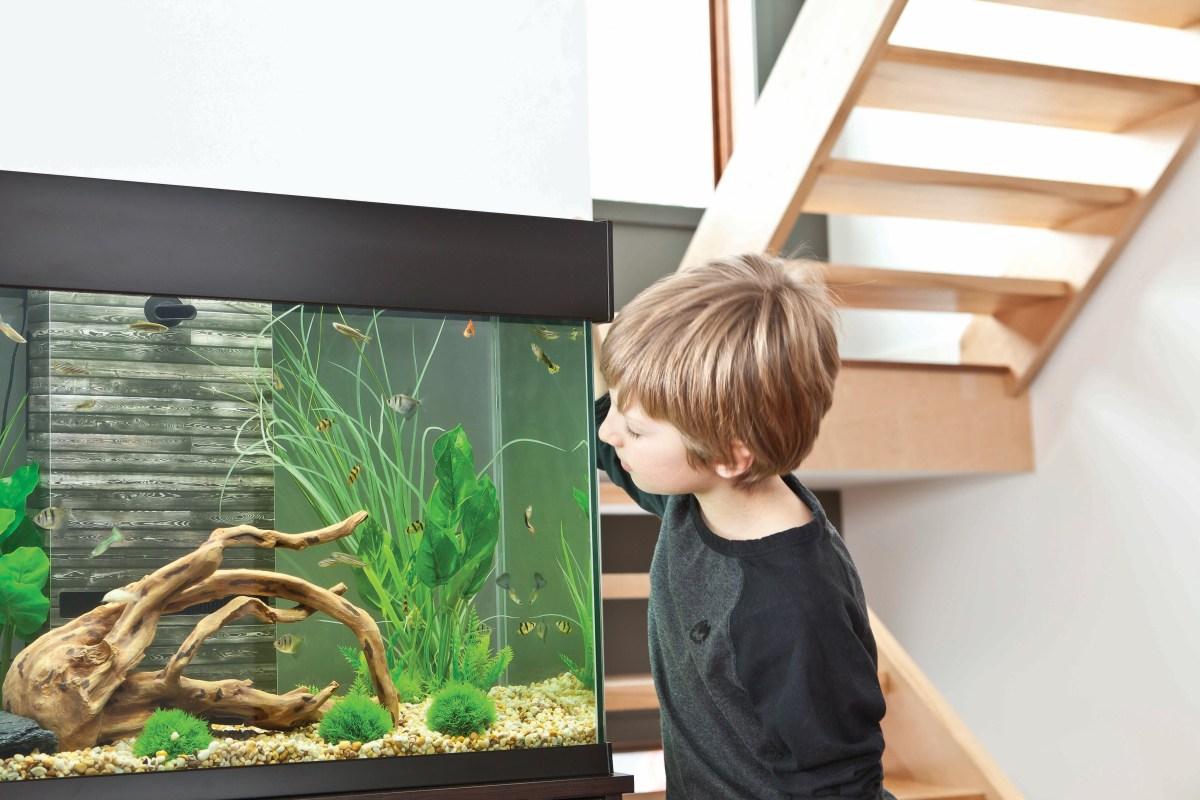 Krmení - základní informace o krmení pro akvarijní ryby