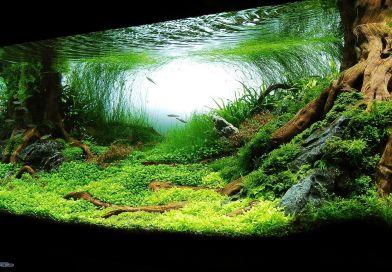 7 zaručených způsobů jak ochladit vodu ve vašem akváriu