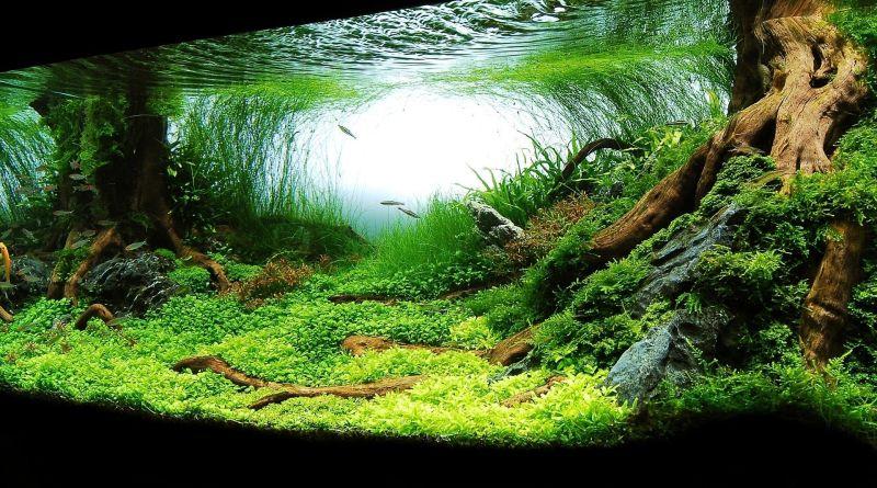akvarium,-zelen-196453