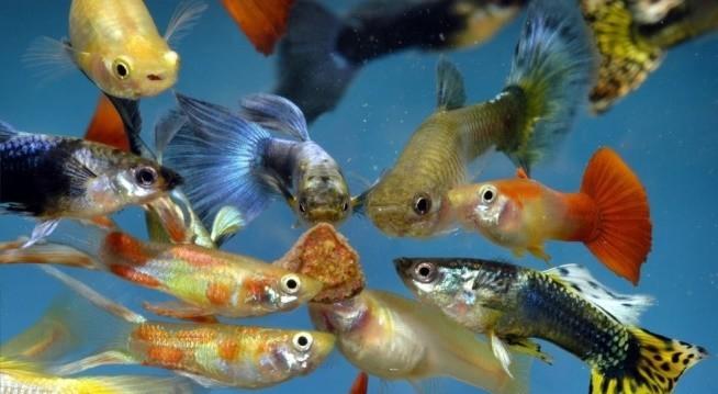 Akvarijní rybičky pro začátečníky