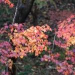 [Photo] 新調レンズの試写を兼ねて…写真散歩@横浜・四季の森公園