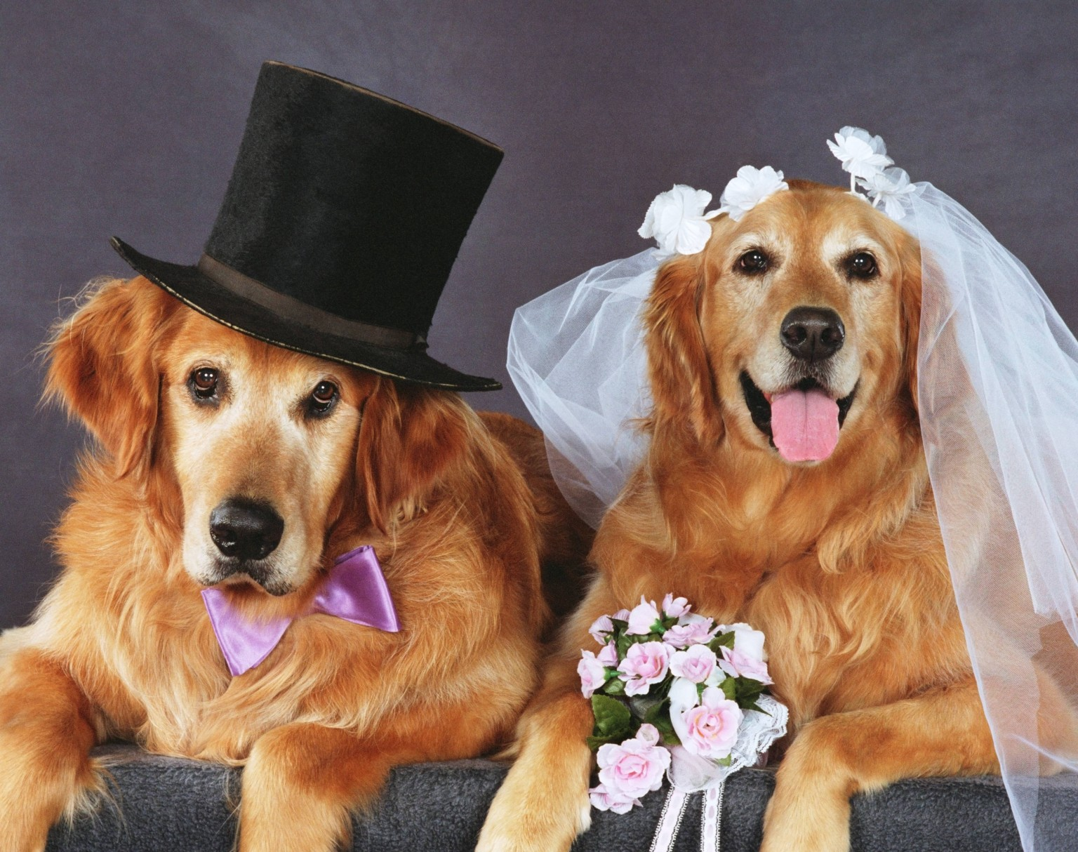 Cute Marriage Couple Wallpaper 10 Things I Learned From My Dog S Fundraiser Wedding