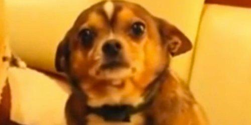 Medium Of Denver The Guilty Dog