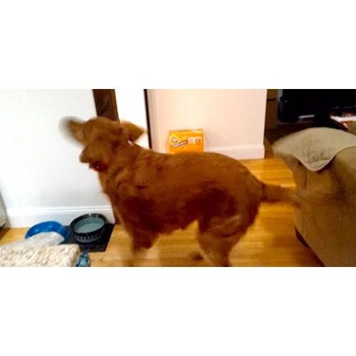 Medium Crop Of Dog Dancing Gif