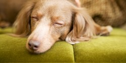Splendent Songs To Help You Fall Asleep Faster Huffpost Antlers Putting Dog To Sleep Lyrics Traducida Putting Dog To Sleep Lyrics Meaning