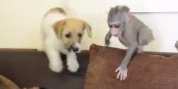 Small Of Monkey Baby Puppy