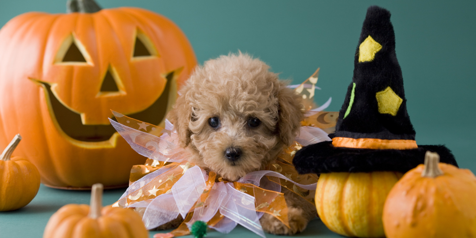 Cute Wallpapers For Adults Halloween From Your Dog S Perspective Huffpost