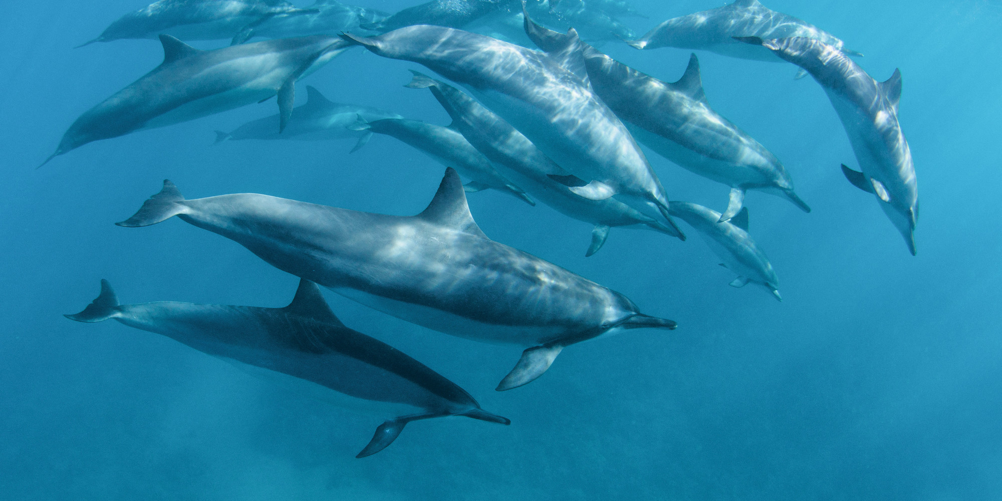 Cute Dolphin Drawing Wallpaper Dolphins Form Complex Social Networks According To New