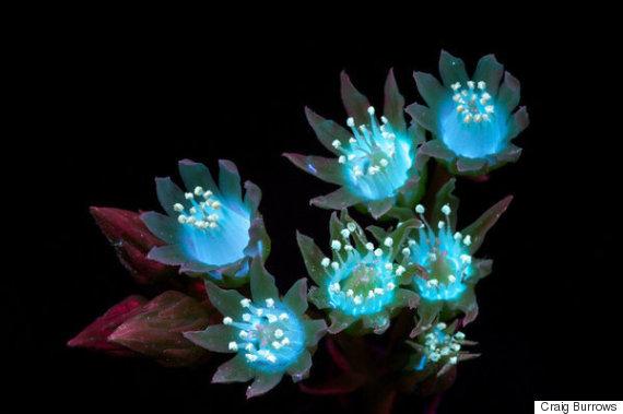 3d Wallpaper Avatar 꽃을 자외선에 비치면 이런 놀라운 모습이 된다 사진 허핑턴포스트코리아