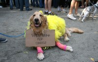 The Funniest Pet Halloween Costumes: Submit Your Own ...
