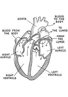 diagram of period cramps