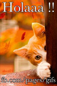 Falling Leaves Live Wallpaper Apps Android 1000 Images About Saludos On Pinterest Navidad Frases