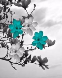 posters black and white and teal | Teal Canvas Floral Wall ...