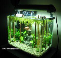 Aquarium on Pinterest   Aquascaping, Aquarium and Nano Aquarium