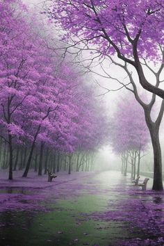 Wallpaper Images Of Fall Trees Lined Lake 1000 Ideas About Purple Trees On Pinterest Tree