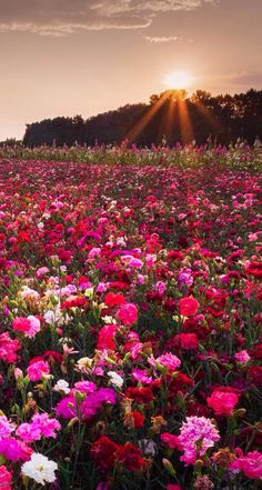 Desktop Wallpaper Fall Flowers 1000 Images About Iphone 5 Cute Wallpapers On Pinterest