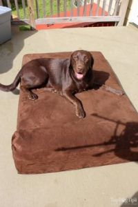 1000+ ideas about Big Dog Beds on Pinterest   Big Dogs ...