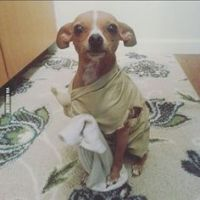 1000+ ideas about Dog Halloween Costumes on Pinterest