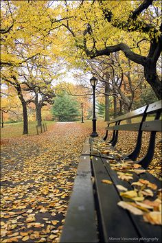 New York City At Night Hd Wallpapers 1000 Images About Park Benches On Pinterest Park
