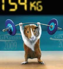 Calendar New Zealand Olympics New Zealand Darts Council 1000 Images About Grappige Dieren On Pinterest Dieren