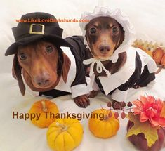 Fall Wallpaper Dog Weenie 1000 Images About Cape May Dogs 4 Thanksgiving On