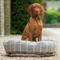 The Wirehaired Vizsla, is a dog breed originating in ...