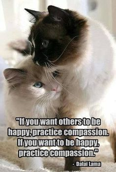 Happy Hug Day Wallpaper With Quotes 1000 Images About Quotes About Cat On Pinterest Cat