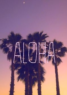Palm Trees Quote Wallpaper 1000 Images About Hawaiian Quotes On Pinterest Aloha