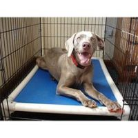 1000+ images about Chew proof dog bed indestructible dog ...