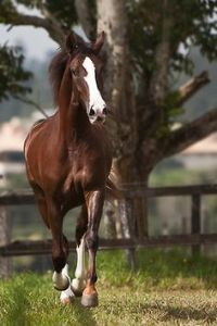 1000+ images about Stuff on Pinterest | Friesian, Outdoor ...