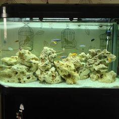 ideas  Aquarium Fish Tanks on Pinterest | Fish Tanks, Ponds and Tanks