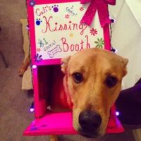 Jack's kissing booth. Best darn dog costume ever ...