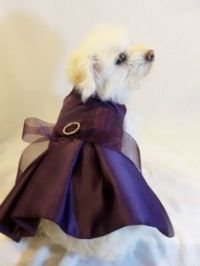 Dog Wedding Attire on Pinterest