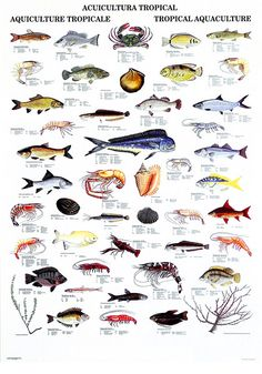 Hawaiian Fish Names List   View entire poster