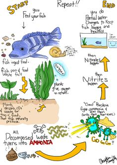 CC Cycle 2 Week 4 on Pinterest | Water Cycle, Carbon Cycle and Magna