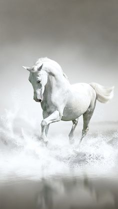 I Want To Believe Wallpaper Iphone 1000 Images About Horse Wallpapers For Iphone On