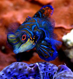 Tank on Pinterest | Reef Aquarium, Saltwater Aquarium and Aquarium