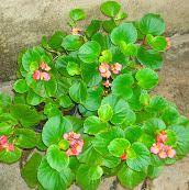 Indoor Plants Kerala on Pinterest | Garden Plants, Terrarium and India