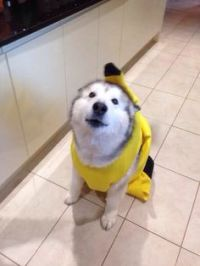 1000+ images about Costumes on Pinterest | Lab safety ...