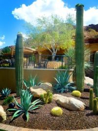 1000+ images about Desert Landscaping Front Yard on ...