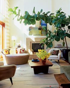 1000 images about indoor plantings on pinterest fiddle