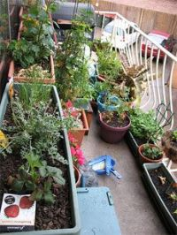 1000+ images about Balcony Gardens on Pinterest   Balcony ...