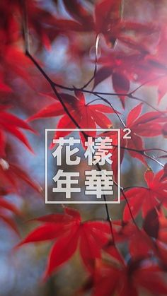 Red Fall Leaves Iphone Wallpaper Logos Bts And Wallpaper For Phone On Pinterest