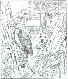 Fall Bird Feeder Wallpaper 1000 Images About Colouring Sheets On Pinterest