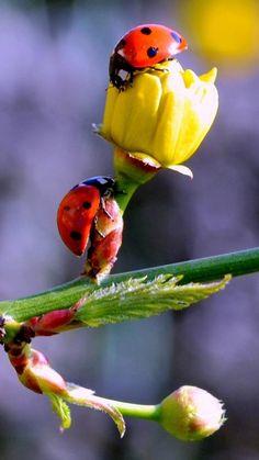 1920x1080__hyla_arborea_european_tree_frog-1245186.jpg (1920×1080)   FROG   Pinterest
