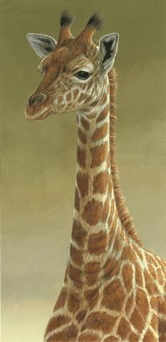 Animal Print Desktop Wallpaper 1000 Images About Art I Love On Pinterest Still Life