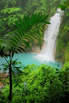 Akaka Falls Wallpaper 1000 Images About Rainforest On Pinterest Rainforests